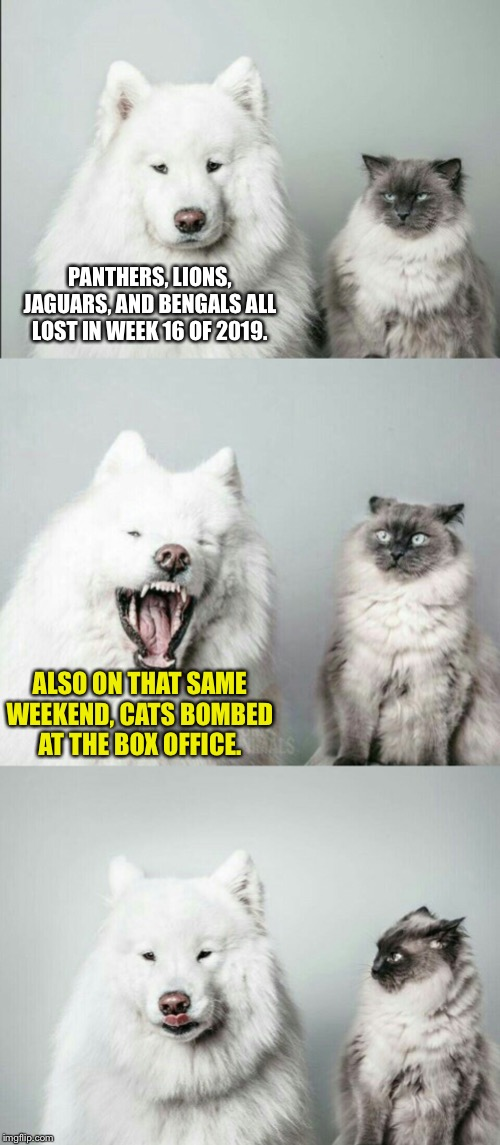 CATS bombed | PANTHERS, LIONS, JAGUARS, AND BENGALS ALL LOST IN WEEK 16 OF 2019. ALSO ON THAT SAME WEEKEND, CATS BOMBED AT THE BOX OFFICE. | image tagged in bad joke dog cat,memes,nfl football,movie,fail,money | made w/ Imgflip meme maker
