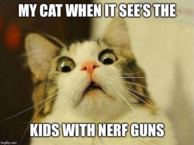 Scared Cat Meme Imgflip