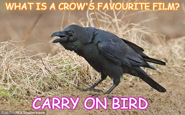 WHAT IS A CROW'S FAVOURITE FILM? CARRY ON BIRD | image tagged in crow | made w/ Imgflip meme maker