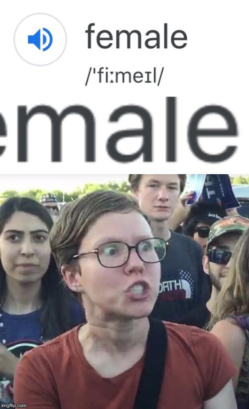 Triggered feminist - Imgflip
