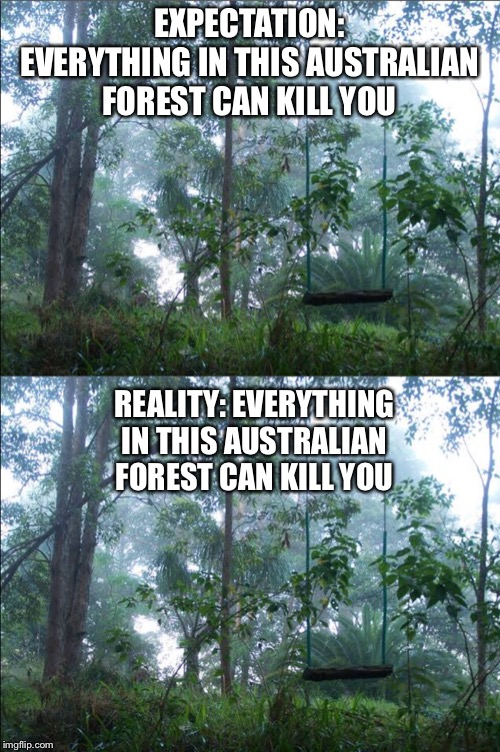 Tourists coming to Australia be like |  EXPECTATION: EVERYTHING IN THIS AUSTRALIAN FOREST CAN KILL YOU; REALITY: EVERYTHING IN THIS AUSTRALIAN FOREST CAN KILL YOU | image tagged in fun,australia,memes,funny | made w/ Imgflip meme maker