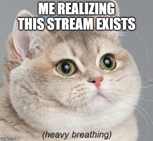Heavy Breathing Cat |  ME REALIZING THIS STREAM EXISTS | image tagged in memes,heavy breathing cat | made w/ Imgflip meme maker