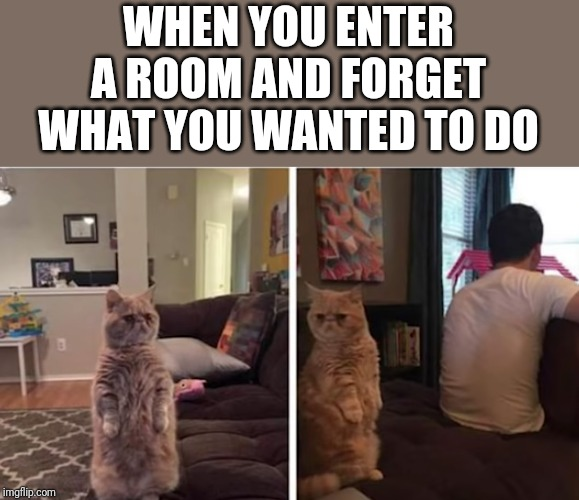 Welp | WHEN YOU ENTER A ROOM AND FORGET WHAT YOU WANTED TO DO | image tagged in memes,cats,funny memes,funny cats,funny meme memes,funny cat memes | made w/ Imgflip meme maker