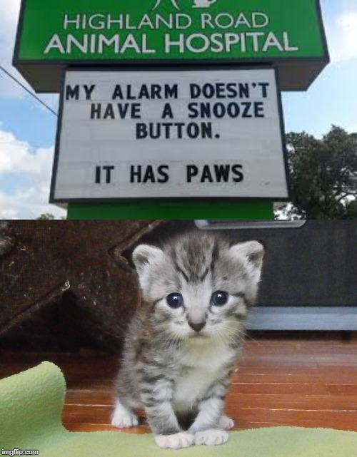 The Kitty Clock | image tagged in alarm clock,adorable,cute kitten,4,paws | made w/ Imgflip meme maker