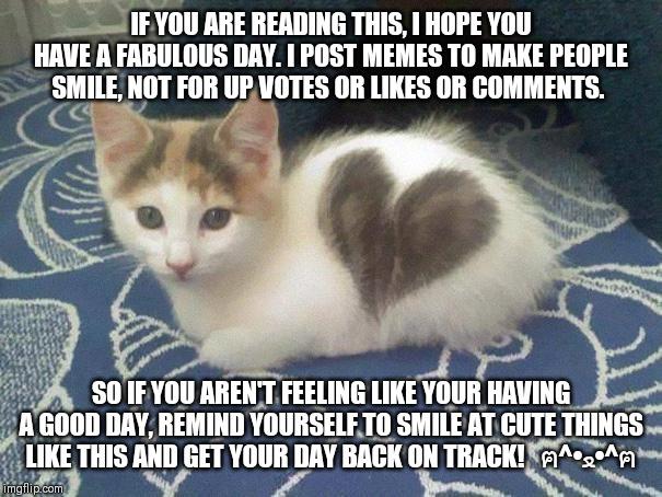 Cat Screaming Meme Hearts
