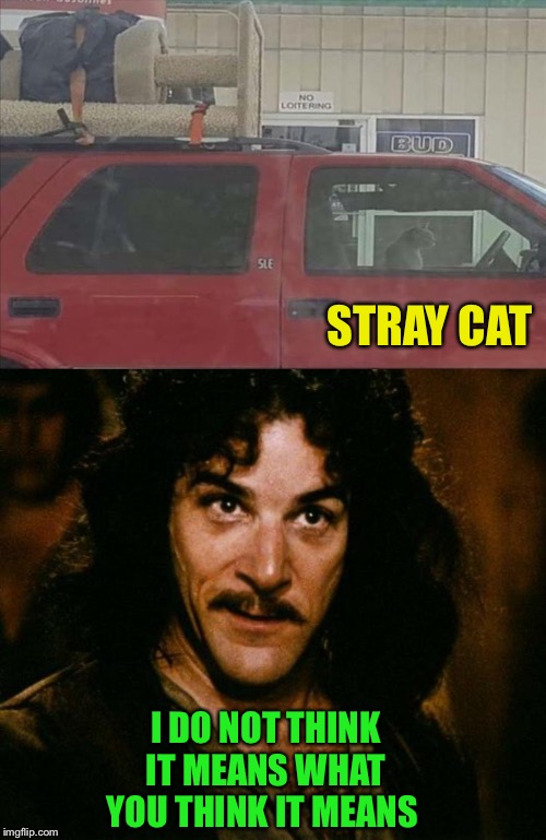 On the road again. | STRAY CAT I DO NOT THINK IT MEANS WHAT YOU THINK IT MEANS | image tagged in memes,inigo montoya,hitting the road,funny | made w/ Imgflip meme maker