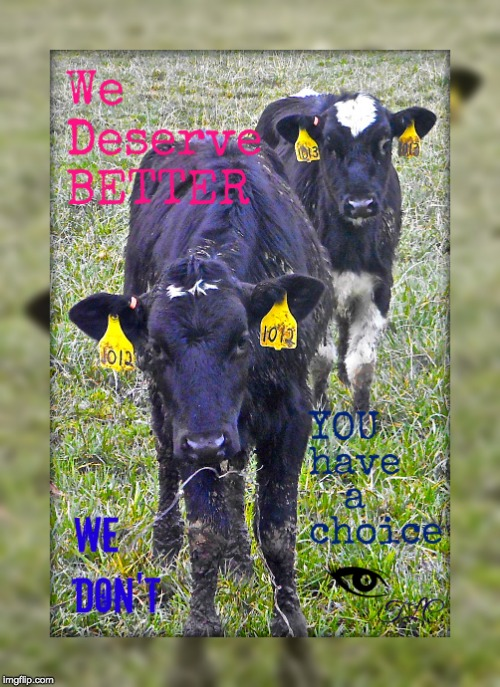 image tagged in cow talk | made w/ Imgflip meme maker