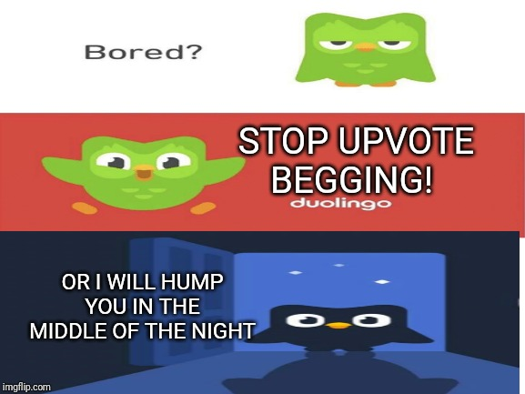 JUST STOOOOOOOOOOOPPPPPPPPPPPPPP |  STOP UPVOTE BEGGING! OR I WILL HUMP YOU IN THE MIDDLE OF THE NIGHT | image tagged in duolingo,duolingo bird,stop it,upvote begging | made w/ Imgflip meme maker