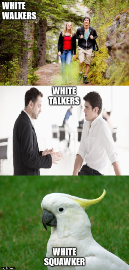image tagged in white,walkers,squawker,talker,cockatoo | made w/ Imgflip meme maker