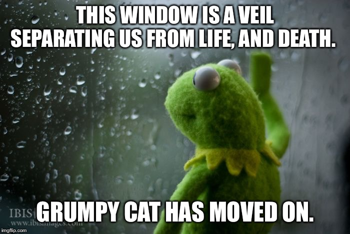 THIS WINDOW IS A VEIL SEPARATING US FROM LIFE, AND DEATH. GRUMPY CAT HAS MOVED ON. | image tagged in kermit window | made w/ Imgflip meme maker