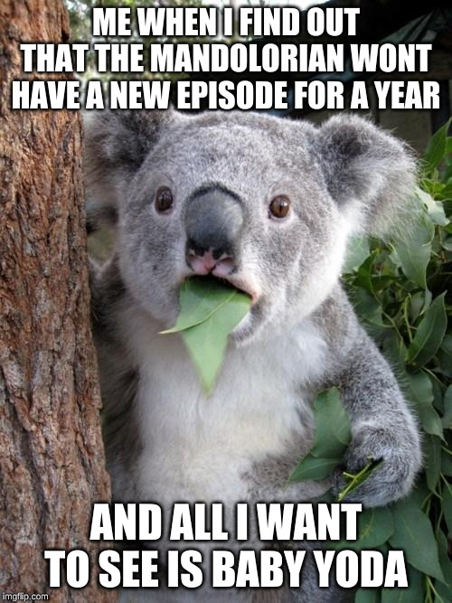 Surprised Koala |  ME WHEN I FIND OUT THAT THE MANDOLORIAN WONT HAVE A NEW EPISODE FOR A YEAR; AND ALL I WANT TO SEE IS BABY YODA | image tagged in memes,surprised koala | made w/ Imgflip meme maker