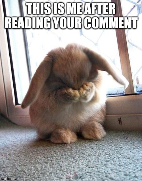 embarrassed bunny | THIS IS ME AFTER READING YOUR COMMENT | image tagged in embarrassed bunny | made w/ Imgflip meme maker