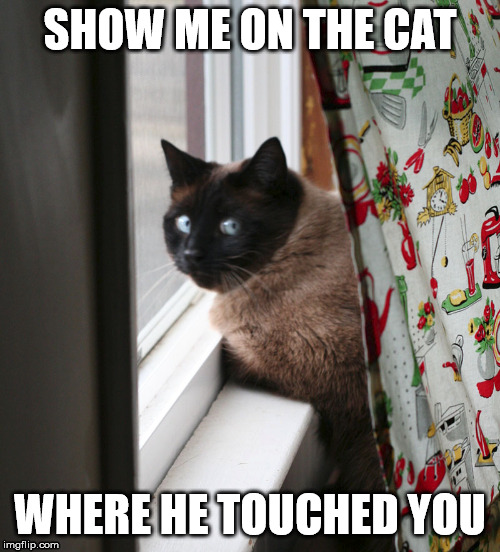 Show Me On The Cat | SHOW ME ON THE CAT WHERE HE TOUCHED YOU | image tagged in funny cat memes | made w/ Imgflip meme maker