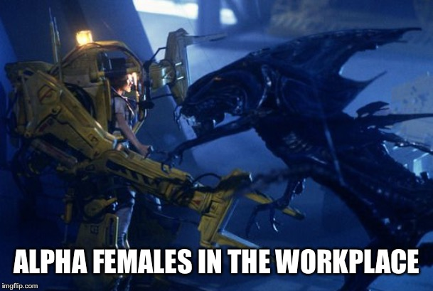 Alpha females |  ALPHA FEMALES IN THE WORKPLACE | image tagged in female,fighting | made w/ Imgflip meme maker