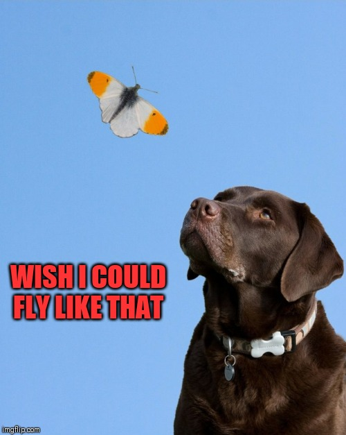 WISH I COULD FLY LIKE THAT | image tagged in dog memes,flying dog,butterflies,i gotta get one of those | made w/ Imgflip meme maker