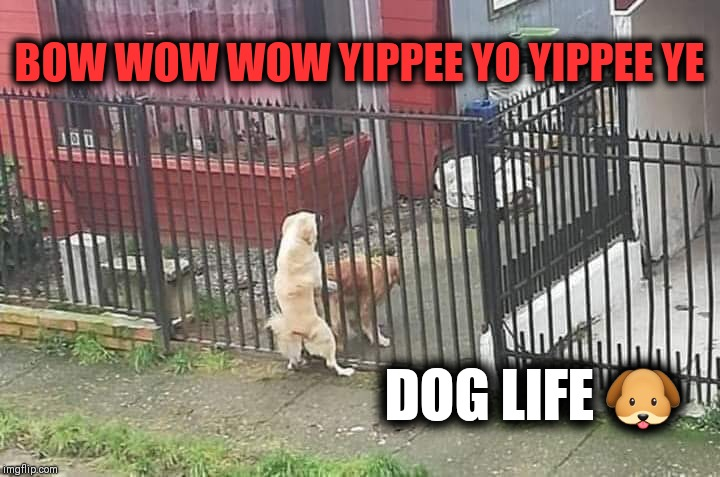 Nuttin but the dog in me | BOW WOW WOW YIPPEE YO YIPPEE YE DOG LIFE ? | image tagged in bad dog,funny dog memes,snoop dogg,thuglife | made w/ Imgflip meme maker