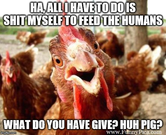 Chicken | HA, ALL I HAVE TO DO IS SHIT MYSELF TO FEED THE HUMANS WHAT DO YOU HAVE GIVE? HUH PIG? | image tagged in chicken | made w/ Imgflip meme maker