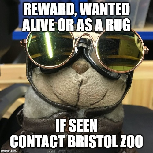 wanted | REWARD, WANTED ALIVE OR AS A RUG IF SEEN CONTACT BRISTOL ZOO | image tagged in alive,carpet,zoo,wanted | made w/ Imgflip meme maker
