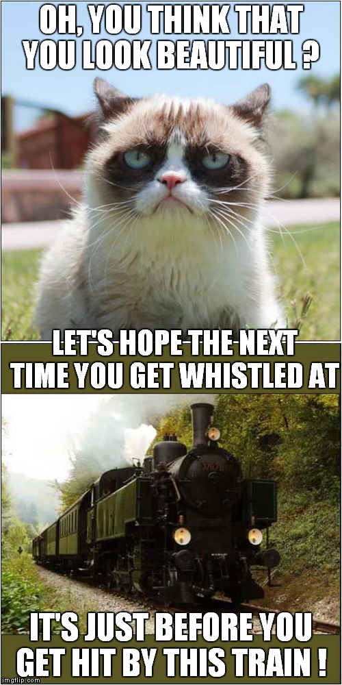 Grumpys Reality Check | OH, YOU THINK THAT YOU LOOK BEAUTIFUL ? IT'S JUST BEFORE YOU GET HIT BY THIS TRAIN ! LET'S HOPE THE NEXT TIME YOU GET WHISTLED AT | image tagged in fun,grumpy cat,train | made w/ Imgflip meme maker