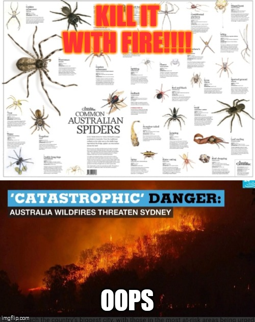 KILL IT WITH FIRE!!!! OOPS | image tagged in australia,spiders,memes | made w/ Imgflip meme maker