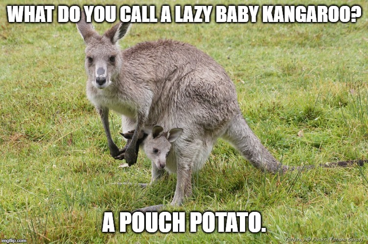 pouch potato | WHAT DO YOU CALL A LAZY BABY KANGAROO? A POUCH POTATO. | image tagged in kangaroo,bad pun,joey | made w/ Imgflip meme maker
