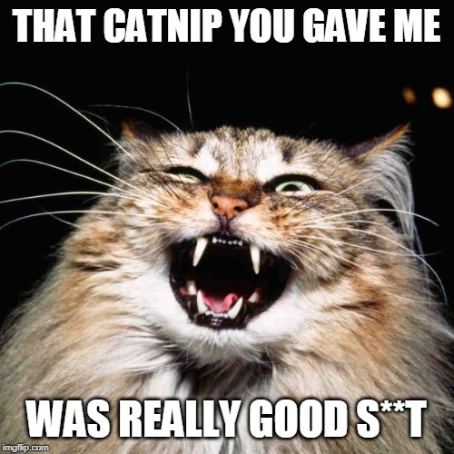 THAT CATNIP YOU GAVE ME WAS REALLY GOOD S**T | image tagged in mad cat | made w/ Imgflip meme maker