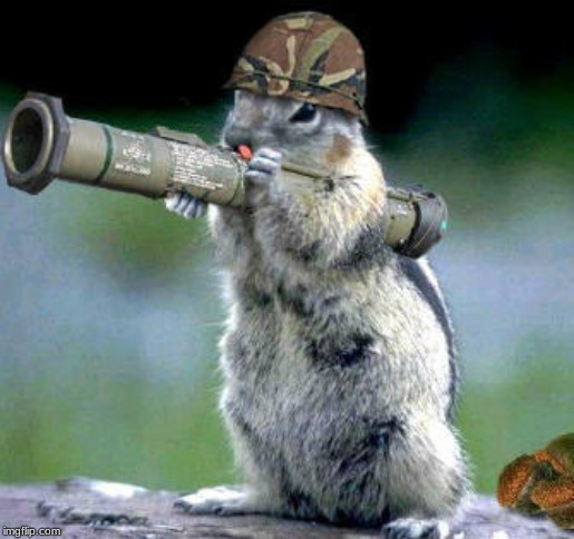 image tagged in memes,bazooka squirrel | made w/ Imgflip meme maker