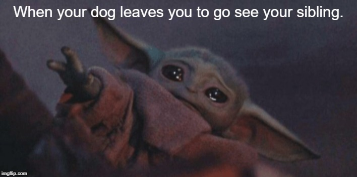 How I feel |  When your dog leaves you to go see your sibling. | image tagged in baby yoda cry,doggo,meme,sibling rivalry | made w/ Imgflip meme maker