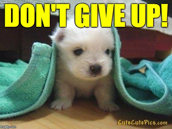 Cute puppy | DON'T GIVE UP! | image tagged in cute puppy | made w/ Imgflip meme maker