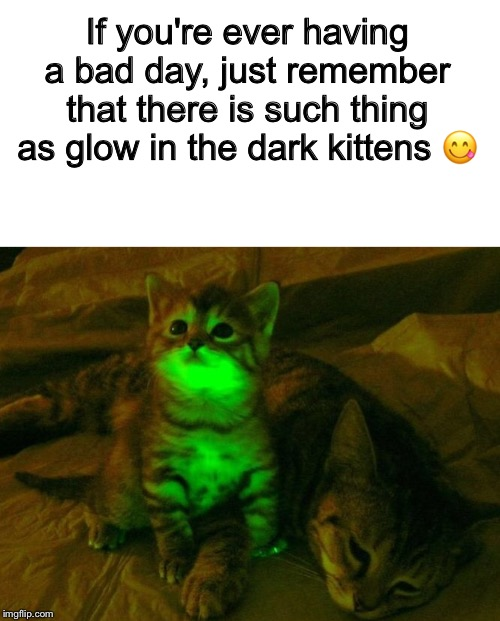 If you're ever having a bad day, just remember that there is such thing as glow in the dark kittens ? | image tagged in blank white template | made w/ Imgflip meme maker