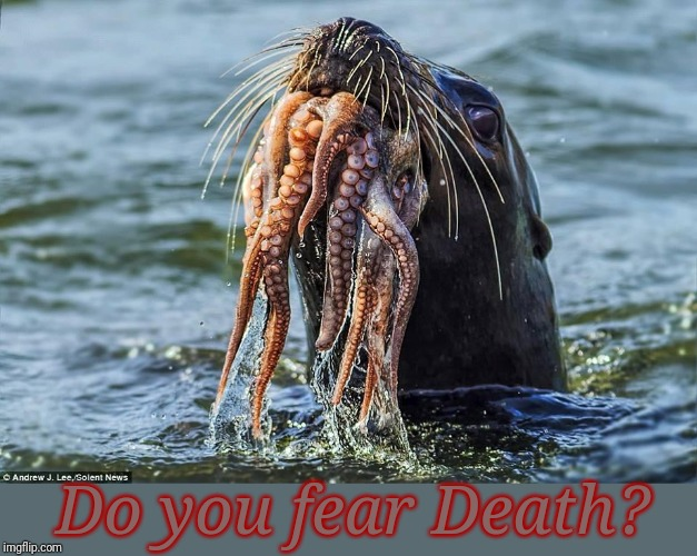 well, do you? |  Do you fear Death? | image tagged in davy jones,seal,octopus | made w/ Imgflip meme maker