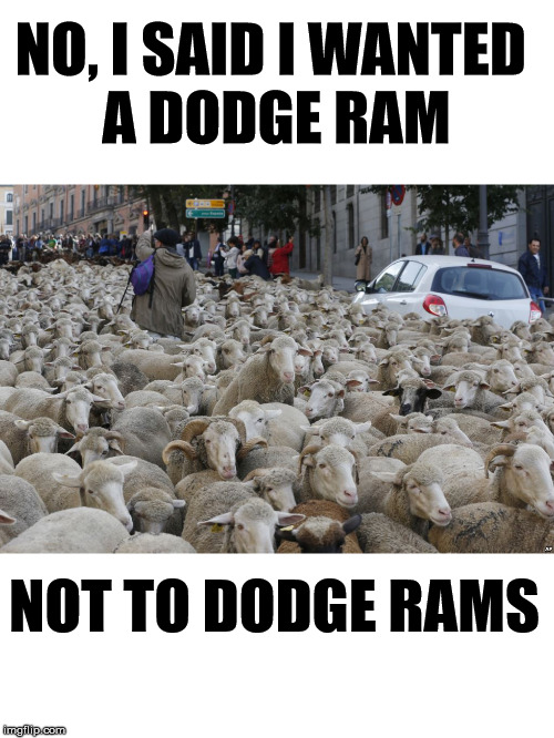 Make sure it has a hemi. |  NO, I SAID I WANTED  A DODGE RAM; NOT TO DODGE RAMS | image tagged in sheep,dodge,rams | made w/ Imgflip meme maker