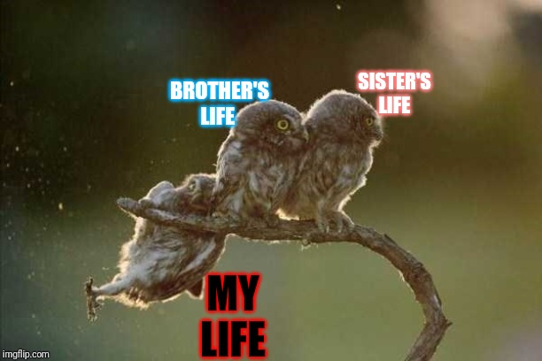 'Nuff said |  SISTER'S LIFE; BROTHER'S LIFE; MY LIFE | image tagged in owl slip,memes,brothers,sisters,life sucks | made w/ Imgflip meme maker