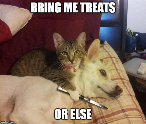 dog hostage | BRING ME TREATS OR ELSE | image tagged in dog hostage | made w/ Imgflip meme maker