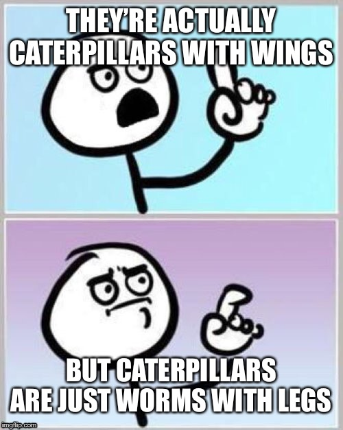 Umm | THEY'RE ACTUALLY CATERPILLARS WITH WINGS BUT CATERPILLARS ARE JUST WORMS WITH LEGS | image tagged in umm | made w/ Imgflip meme maker
