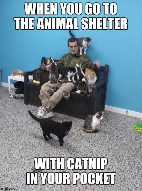 WHEN YOU GO TO THE ANIMAL SHELTER WITH CATNIP IN YOUR POCKET | image tagged in cats,funny cats,cat memes | made w/ Imgflip meme maker