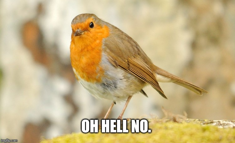 U wot m8 Robin | OH HELL NO. | image tagged in u wot m8 robin | made w/ Imgflip meme maker