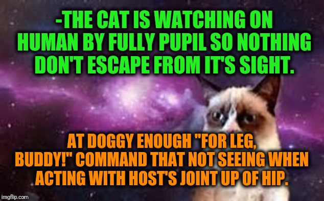 "-Are details of home gathered pets, their nuances. | -THE CAT IS WATCHING ON HUMAN BY FULLY PUPIL SO NOTHING DON'T ESCAPE FROM IT'S SIGHT. AT DOGGY ENOUGH ""FOR LEG, BUDDY!"" COMMAND THAT NOT SEE 