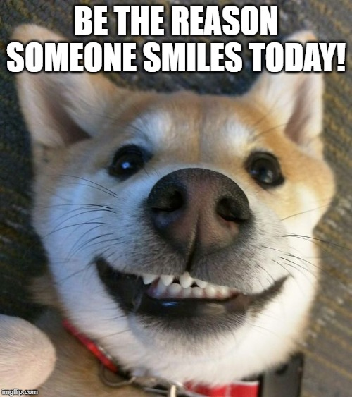 Smile | BE THE REASON SOMEONE SMILES TODAY! | image tagged in dogs,funny dogs,smile,mondays | made w/ Imgflip meme maker