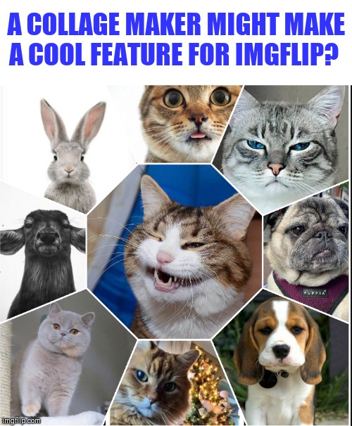 A COLLAGE MAKER MIGHT MAKE A COOL FEATURE FOR IMGFLIP? | made w/ Imgflip meme maker