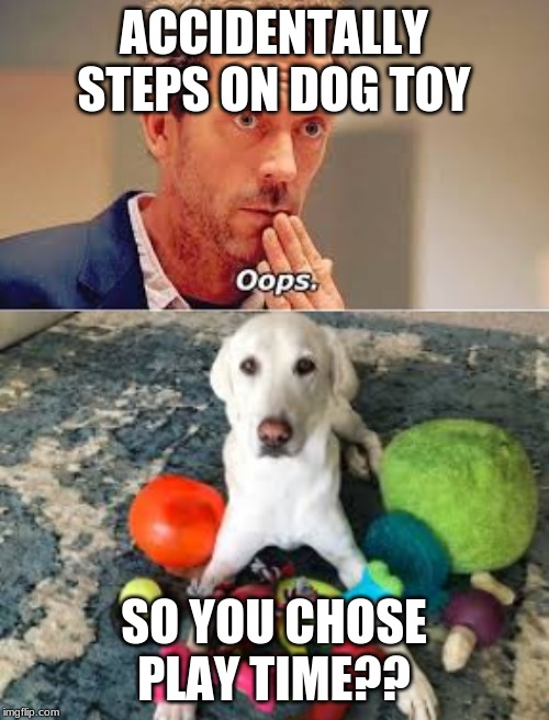 ACCIDENTALLY STEPS ON DOG TOY SO YOU CHOSE PLAY TIME?? | made w/ Imgflip meme maker
