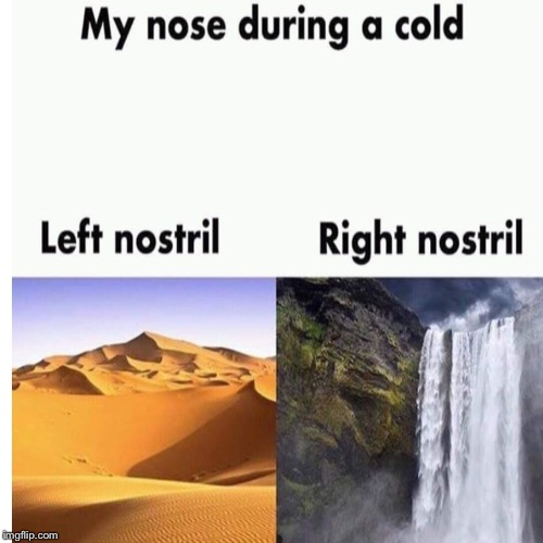 Daily repost | image tagged in cold,nostril,daily repost | made w/ Imgflip meme maker
