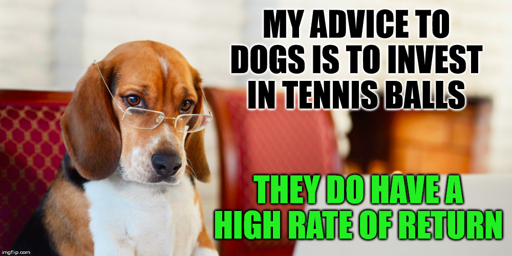 When dogs give advice. | MY ADVICE TO DOGS IS TO INVEST IN TENNIS BALLS THEY DO HAVE A HIGH RATE OF RETURN | image tagged in smart dog,advice dog,return,tennis | made w/ Imgflip meme maker