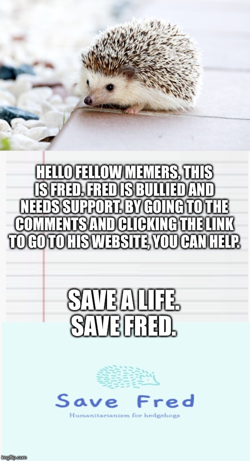 Please support this bullied hedgehog. ? |  HELLO FELLOW MEMERS, THIS IS FRED. FRED IS BULLIED AND NEEDS SUPPORT. BY GOING TO THE COMMENTS AND CLICKING THE LINK TO GO TO HIS WEBSITE, YOU CAN HELP. SAVE A LIFE. SAVE FRED. | image tagged in hedgehog,save,help,thank you | made w/ Imgflip meme maker