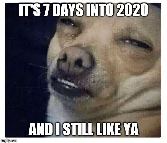 Chihuahua  | IT'S 7 DAYS INTO 2020 AND I STILL LIKE YA | image tagged in chihuahua | made w/ Imgflip meme maker