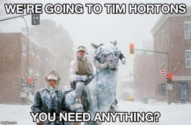 Canadians On Critters Getting Coffee | image tagged in canada,tim hortons,coffee,run | made w/ Imgflip meme maker