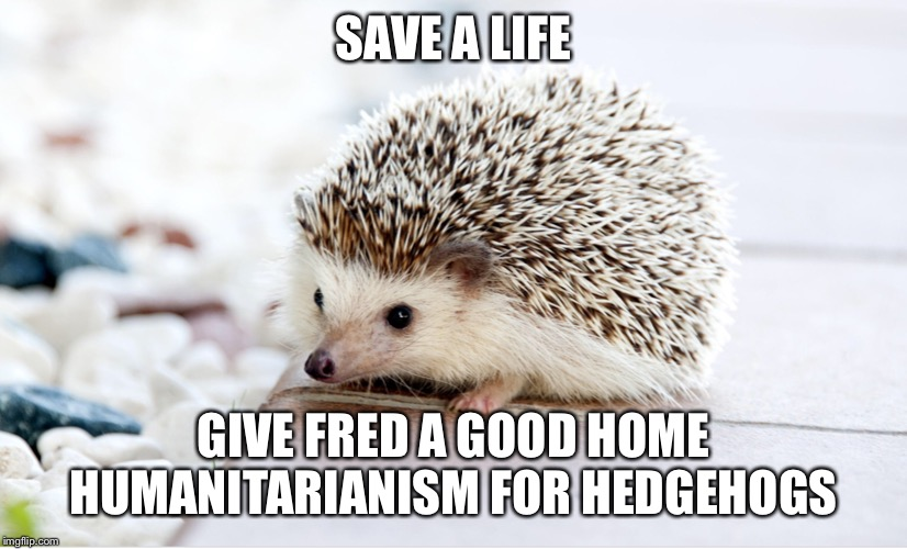 #Fredtoo | SAVE A LIFE GIVE FRED A GOOD HOME HUMANITARIANISM FOR HEDGEHOGS | image tagged in hedgehog,humanity | made w/ Imgflip meme maker