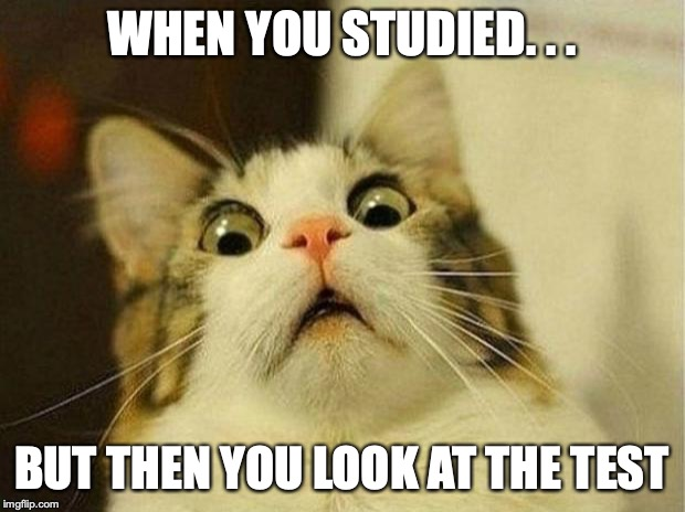Scared Cat Meme | WHEN YOU STUDIED. . . BUT THEN YOU LOOK AT THE TEST | image tagged in memes,scared cat | made w/ Imgflip meme maker