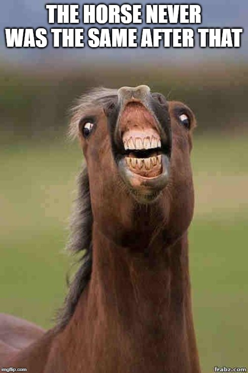 horse face | THE HORSE NEVER WAS THE SAME AFTER THAT | image tagged in horse face | made w/ Imgflip meme maker