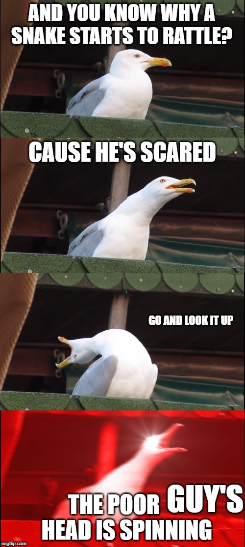 Inhaling Seagull Meme | AND YOU KNOW WHY A SNAKE STARTS TO RATTLE? CAUSE HE'S SCARED GO AND LOOK IT UP THE POOR       HEAD IS SPINNING GUY'S | image tagged in memes,inhaling seagull | made w/ Imgflip meme maker
